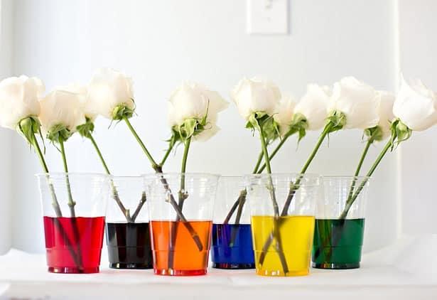 How to dye rainbow flowers mightylinksfo