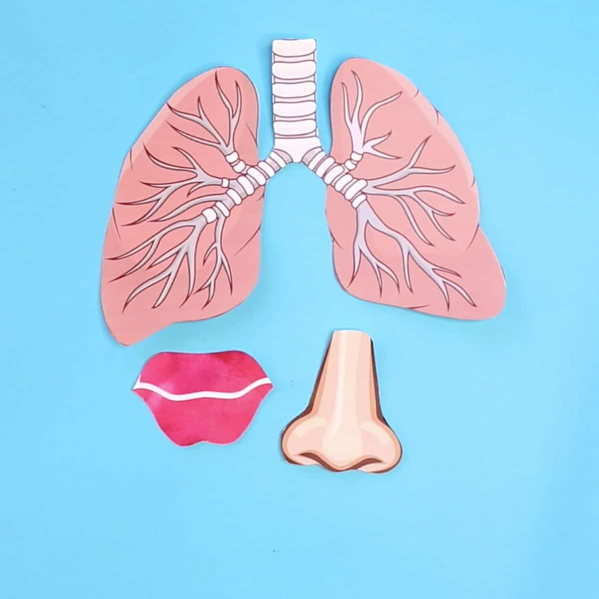 hello, wonderful - how to make a lung model with kids, Powerpoint templates