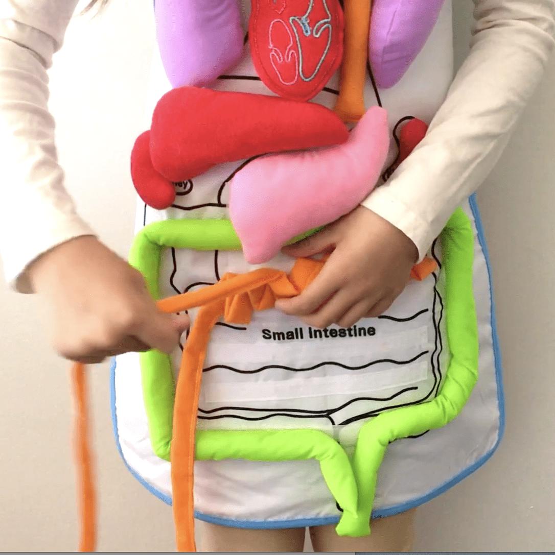 FUN ANATOMY APRON TOY FOR KIDS