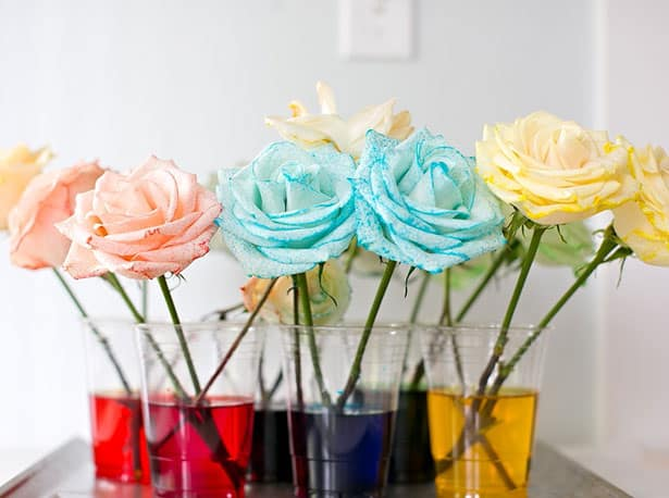 how to dye rainbow flowers