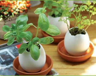 EGGLINGS: MINI CRACK AND GROW POTS