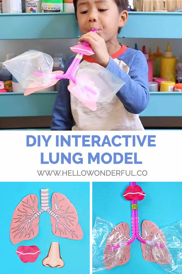 Make a DIY working lung model for learning with kids.