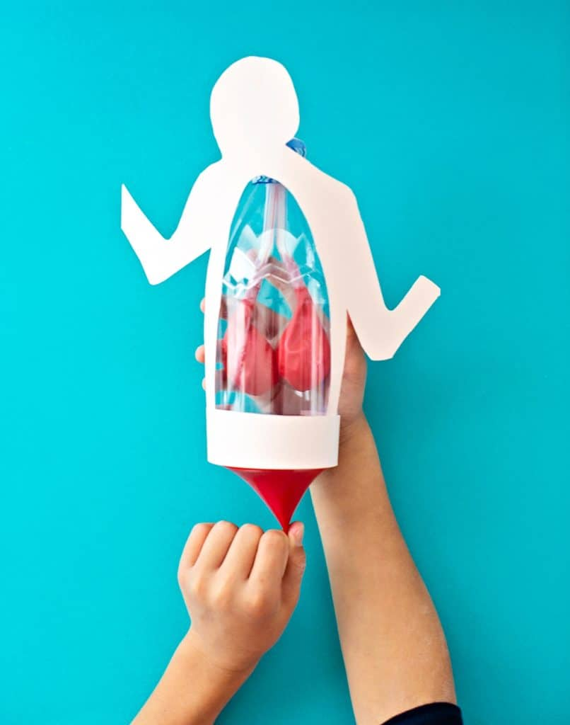 Lung Anatomy in a Bottle Activity for Kids Science