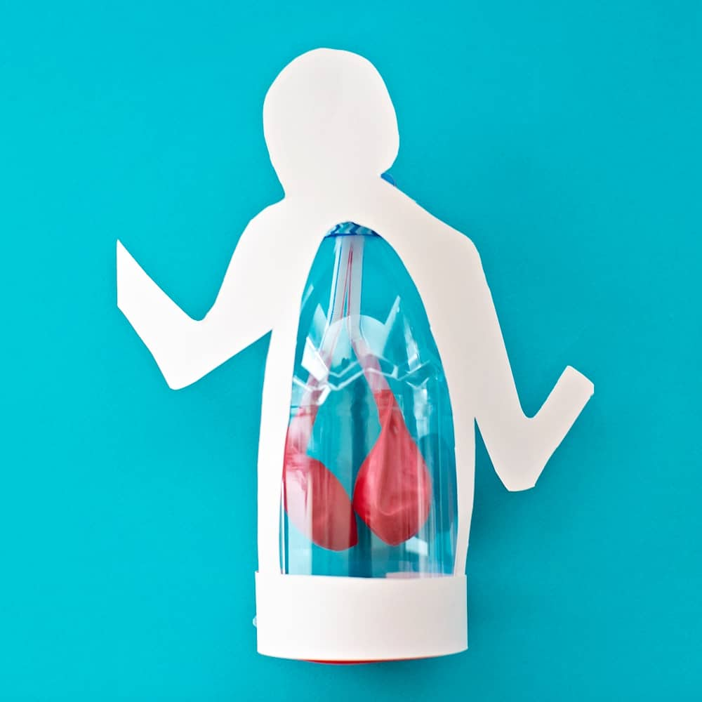 Lung Anatomy in a Bottle Activity for Kids To teach