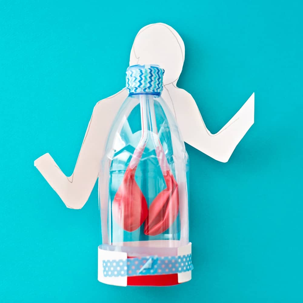 Lung Anatomy in a Bottle Activity