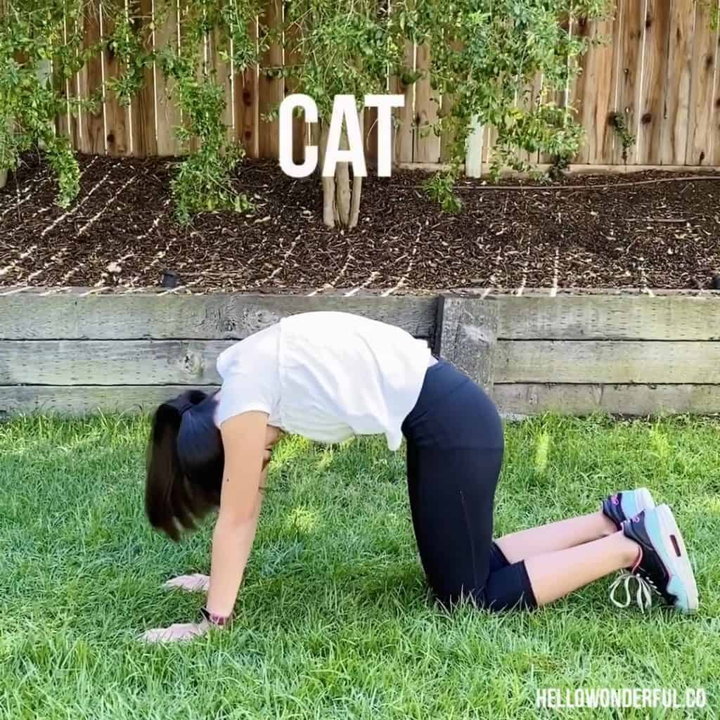 Animal Exercise for Kids. Cat exercise