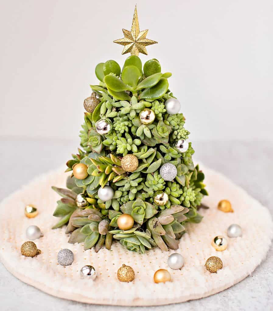 Diy Succulent Christmas Tree Easy Succlent Tree You Can Make