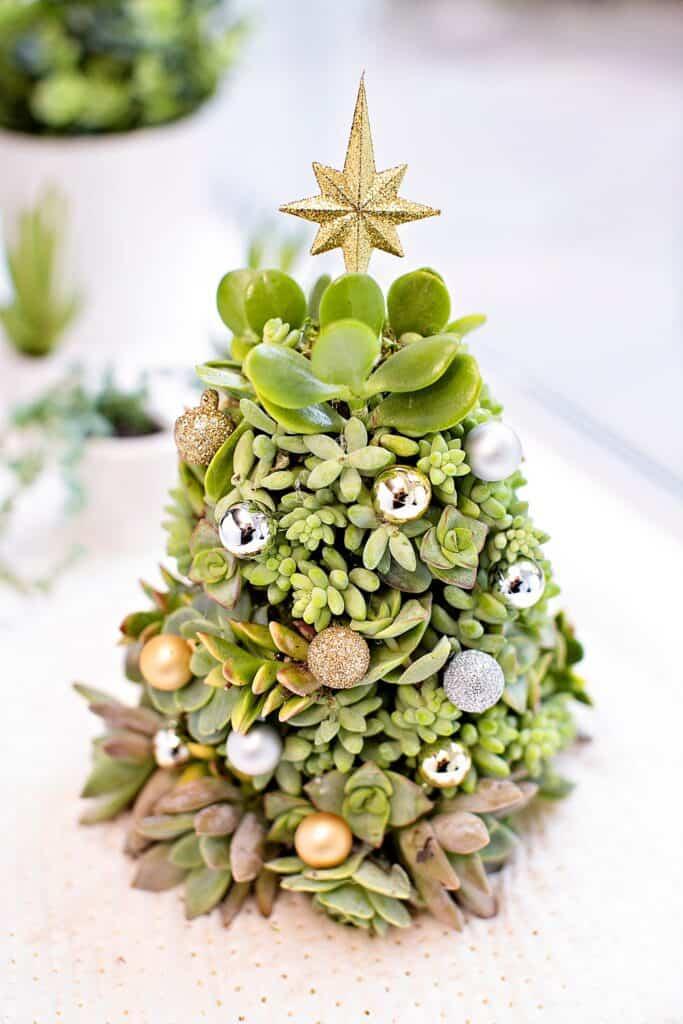 DIY succulent Christmas Tree