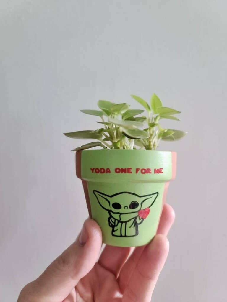 yoda one for me plant